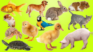 top best animals for kids and families pets for kids