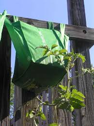 Upside Down Tomato Planter by Upside Down Tomatoes Why Oh Why Your Small Kitchen Garden
