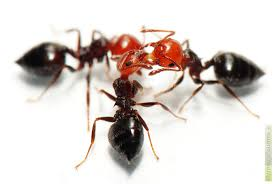 fourmis dans la cuisine chasser les fourmis de la maison