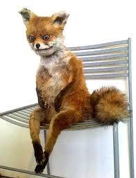 Taxidermy Fox Meme - fox taxidermy meme blank template imgflip