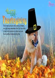 thanksgiving dog thanksgiving library quotes best images collections hd for
