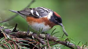 analysis the economic value of birds all about birds