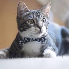Kitten Halloween Costume Shop Halloween Cat Collar Wanelo
