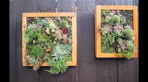 Home Vertical Garden by Home Vertical Succulent Garden Youtube