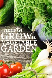 Growing Your Own Vegetable Garden by How To Grow A Vegetable Garden Vegetable Garden Gardens And You Ve