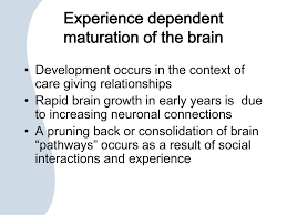 experience dependent brain growth ppt attachment family relationships and the importance of
