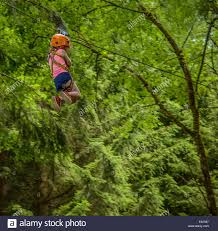 on a zip line in a forest stock photo royalty free image