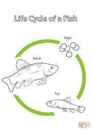 life cycle of a fish coloring page free printable coloring pages