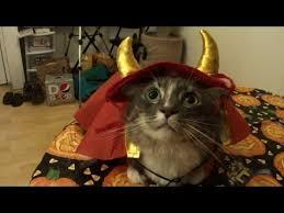 Cat Halloween Costumes Cats Cats Halloween Costumes