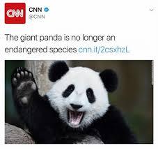 Panda Meme Mascara - panda no makeup makeup daily