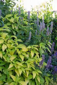 beautiful herb gardens zandalus net