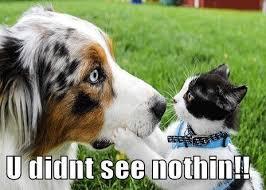 australian shepherd meme 25 funny dog memes part 4 dogtime