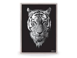 poster tiger black black white posters categories