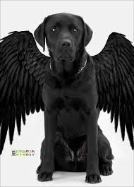 Black Raven Halloween Costume 52 Dog Halloween Costumes Images Costume Ideas