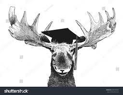 funny graduation image moose graduation cap stock illustration