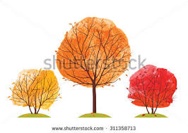 fall tree isolated stock images royalty free images u0026 vectors