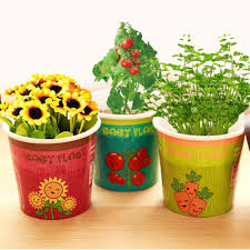 compare prices on baby pot plants online shopping buy low price