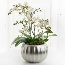 Orchid Delivery Orchid Plants By Post Free Uk Delivery Flying Flowers