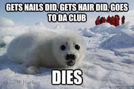 Baby Seal Meme - clubbing seal memes quickmeme