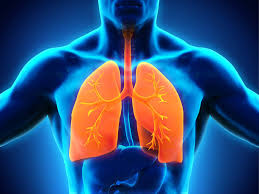 Human Anatomy Respiratory System Respiratory System Pictures Images And Stock Photos Istock