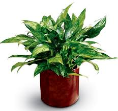 names of houseplants with pictures identifying common house plants