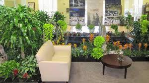 hanging house plants indoor flowering plants indoor hanging my