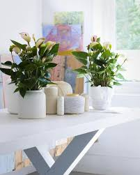 home interior plants beginning to create indoor gardens my decorative