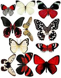 29 best printable images on pinterest butterflies butterfly