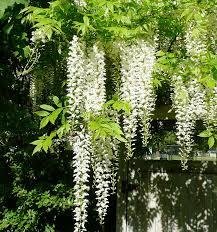 Low Maintenance Plants And Flowers - low maintenance gardens in seattle