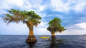 Vero Beach Florida Map by Birding Paradise Vero Beach Sebastian Fellsmere Florida