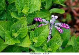 dragonfly garden stock photos dragonfly garden stock images alamy