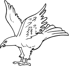 hawk coloring pages printable including cartoon hawk coloring