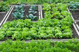 easy vegetable gardening grow garden vegetables part 3