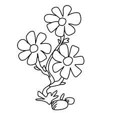 zinnia flower coloring page flower coloring pages of