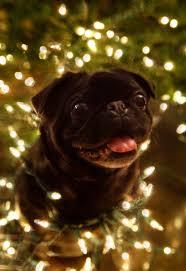 varaluz lighting christmas and pug