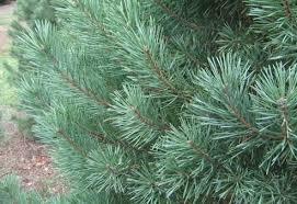 tree types bob vila