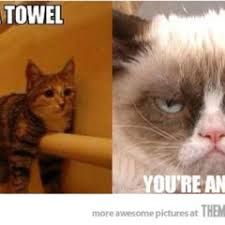 You Re A Towel Meme - humorous archives page 953 of 974 cat planet cat planet