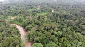canopy amazon descending to the canopy of pristine amazonian rainforest above the