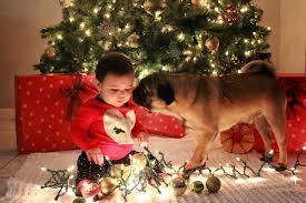 cute dog christmas card ideas christmas lights decoration