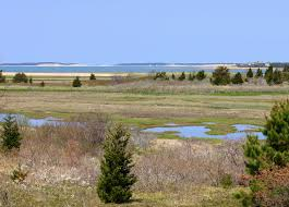 i used to birds wellfleet bay wildlife sanctuary beaches