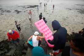 volunteers rush to the rescue of florida u0027s tourist attractions in