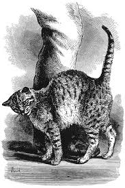 emotion in animals wikipedia