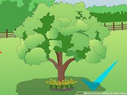 how to choose where to plant trees 6 steps with pictures