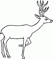 coloring pages deer of to print animal mule mintreet