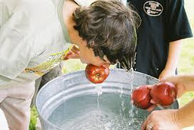 apple bobbing wikipedia