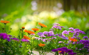 garden live wallpaper hd flower background 3d android apps on