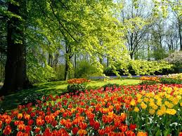 keukenhof flower gardens keukenhof gardens netherlands