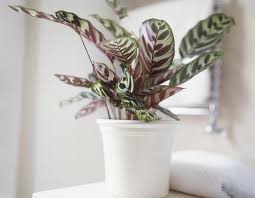 low light houseplants plants that don t require much light 14 houseplants that can survive in even the darkest corner low