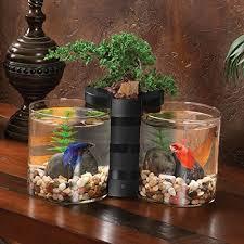 Betta Fish Decorations Betta Fish Glass Bowl Betta Fish Betta And Fish