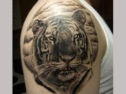 tiger black and grey tiger black tiger
